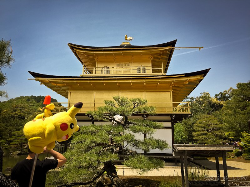 Temples and shrine to visit in Kyoto: Our guide, Pikachu, showing us the surreal gardens and stunning temple.