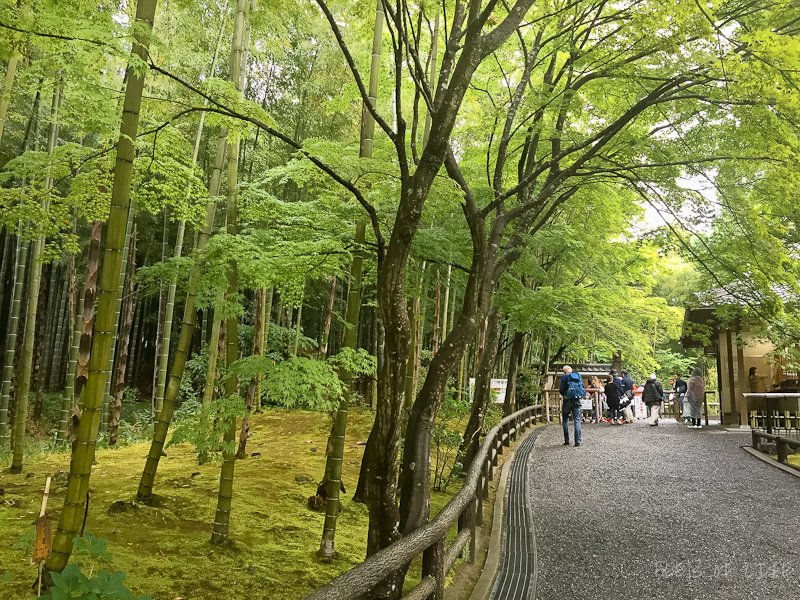 Bamboo Forest - It's so green that it puts the color green to shame!