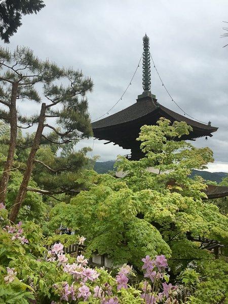 A pagoda peeking through the tall trees